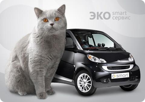 Smart2_newcat